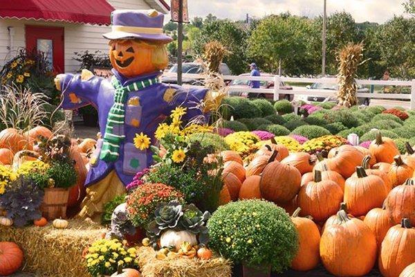 Gertens Pumpkin Fest