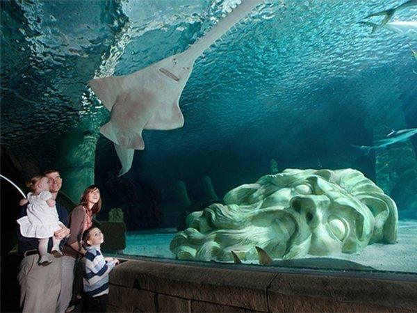 SeaLife Aquarium Mall of America